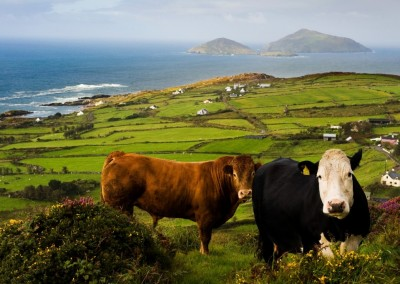 The Blasket Islands